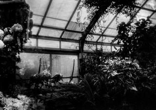 Allan Gardens (2 of 26)